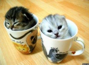 Kitten-pic-cute-kittens-16292232-640-473